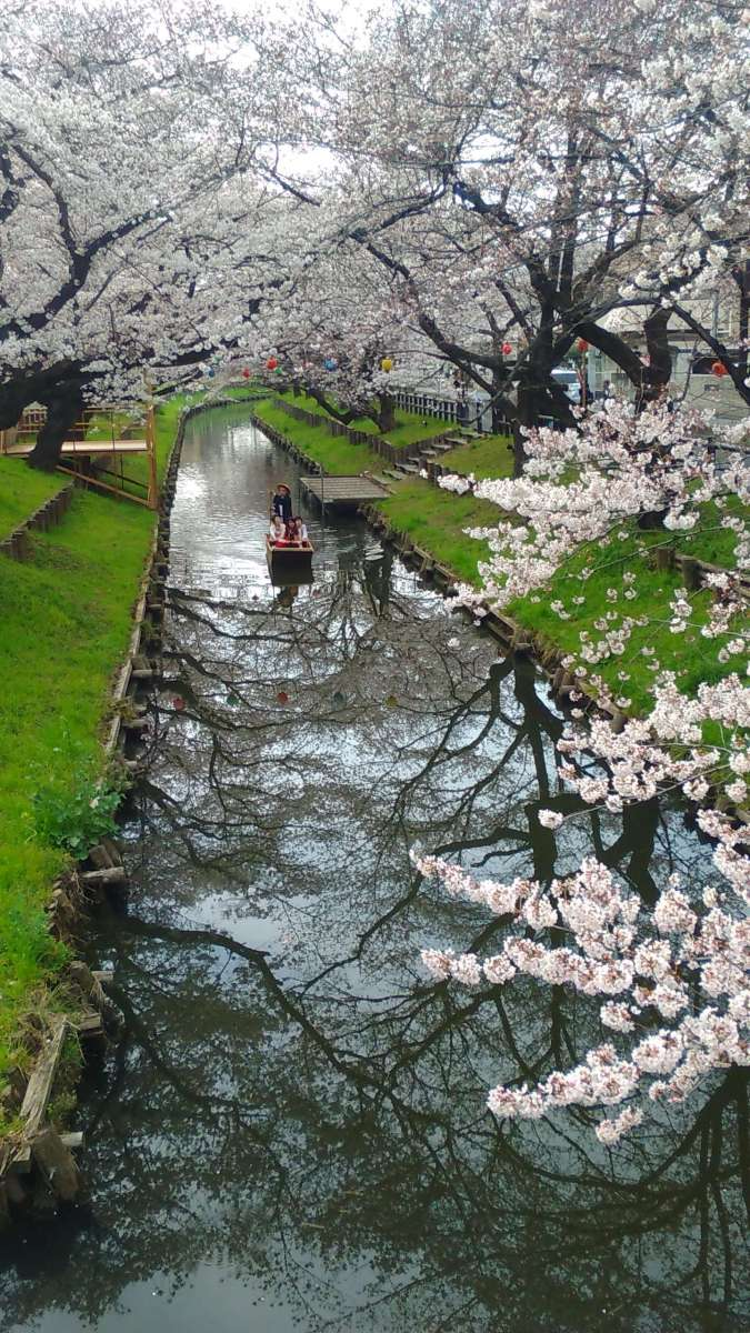 Boat Ride on Shingashi River at back of Hikawa Shrine | KAWAGOE